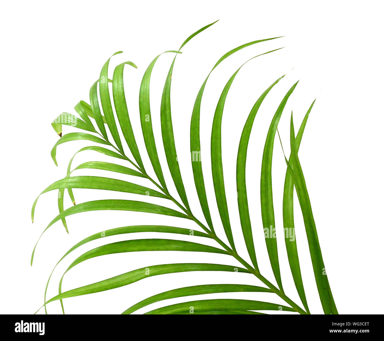 Palm fronds waving in the wind, isolated Stock Photo