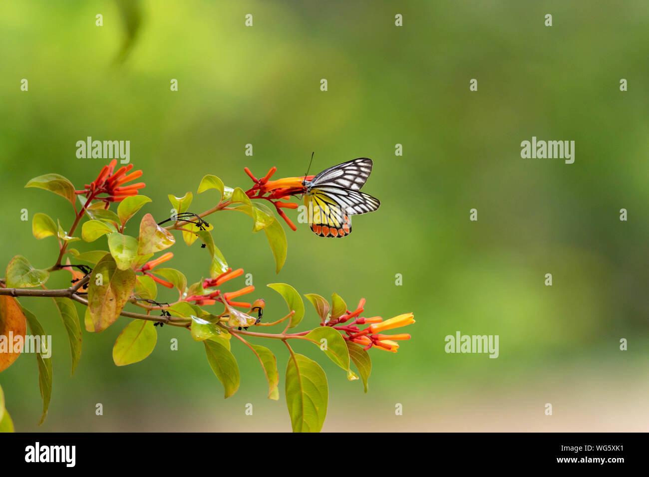 Wonderful Butterfly on a Flower Stock Photo