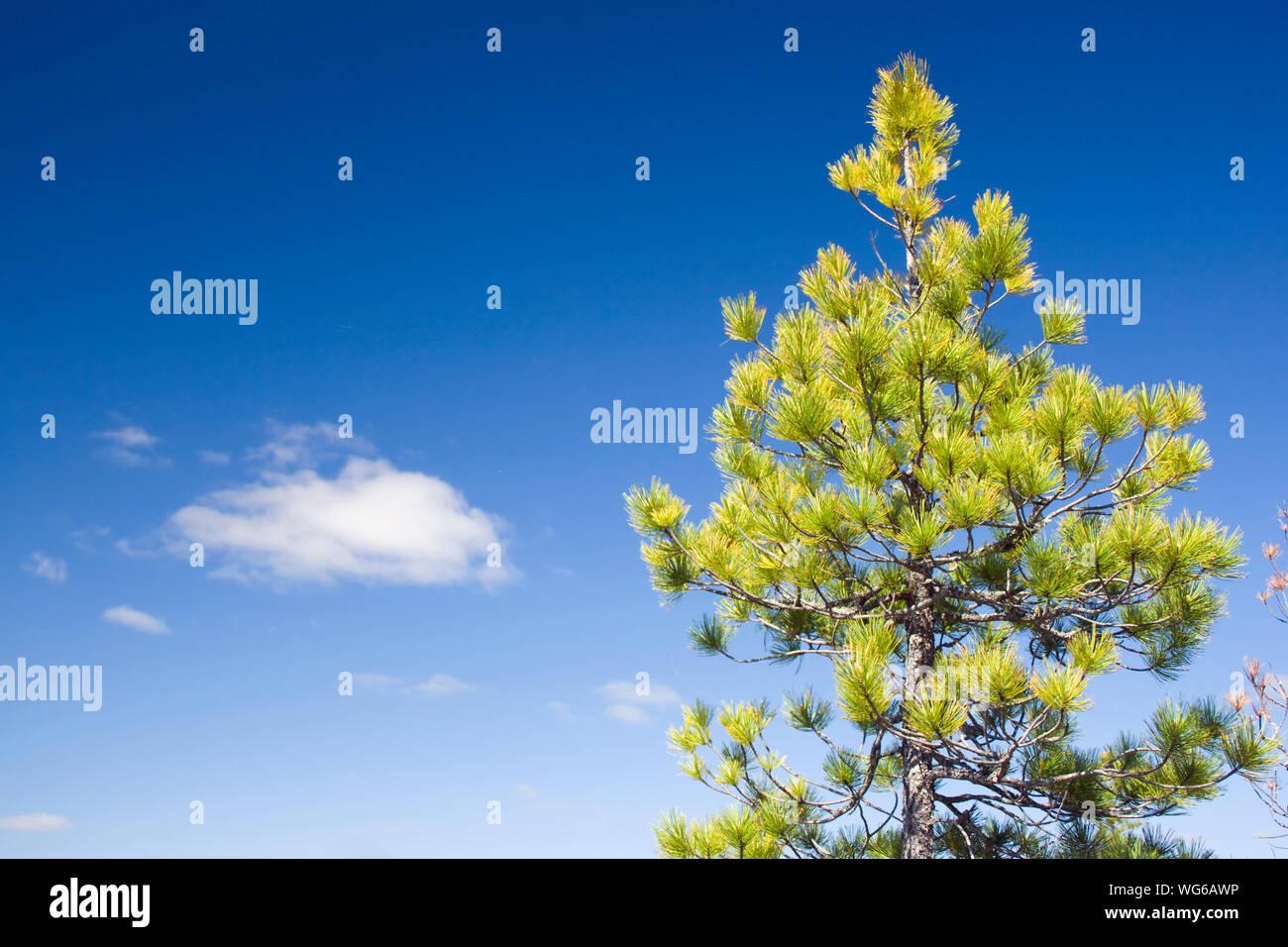 Siberian Taiga Stock Photos & Siberian Taiga Stock Images