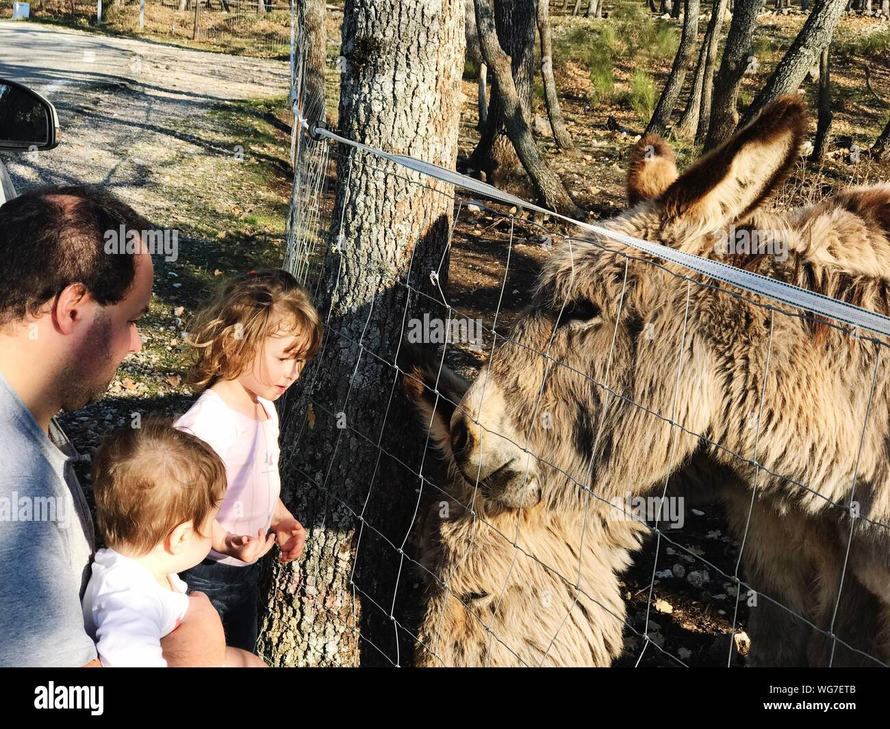 Family Looking At Donkeys By Fence On Sunny Day Stock Photo