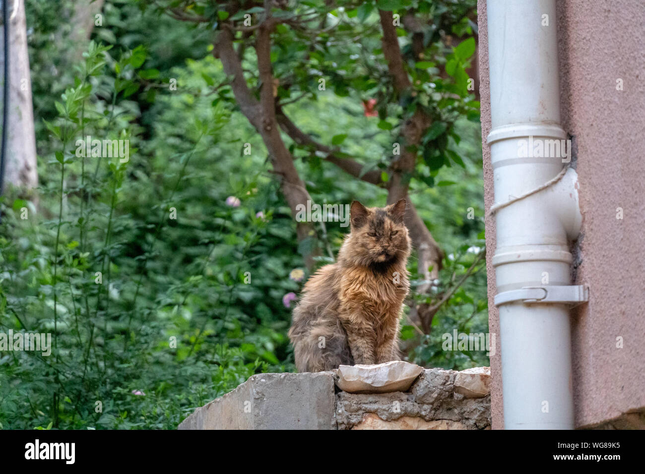 Stray cat with orange fur sits on step Stock Photo