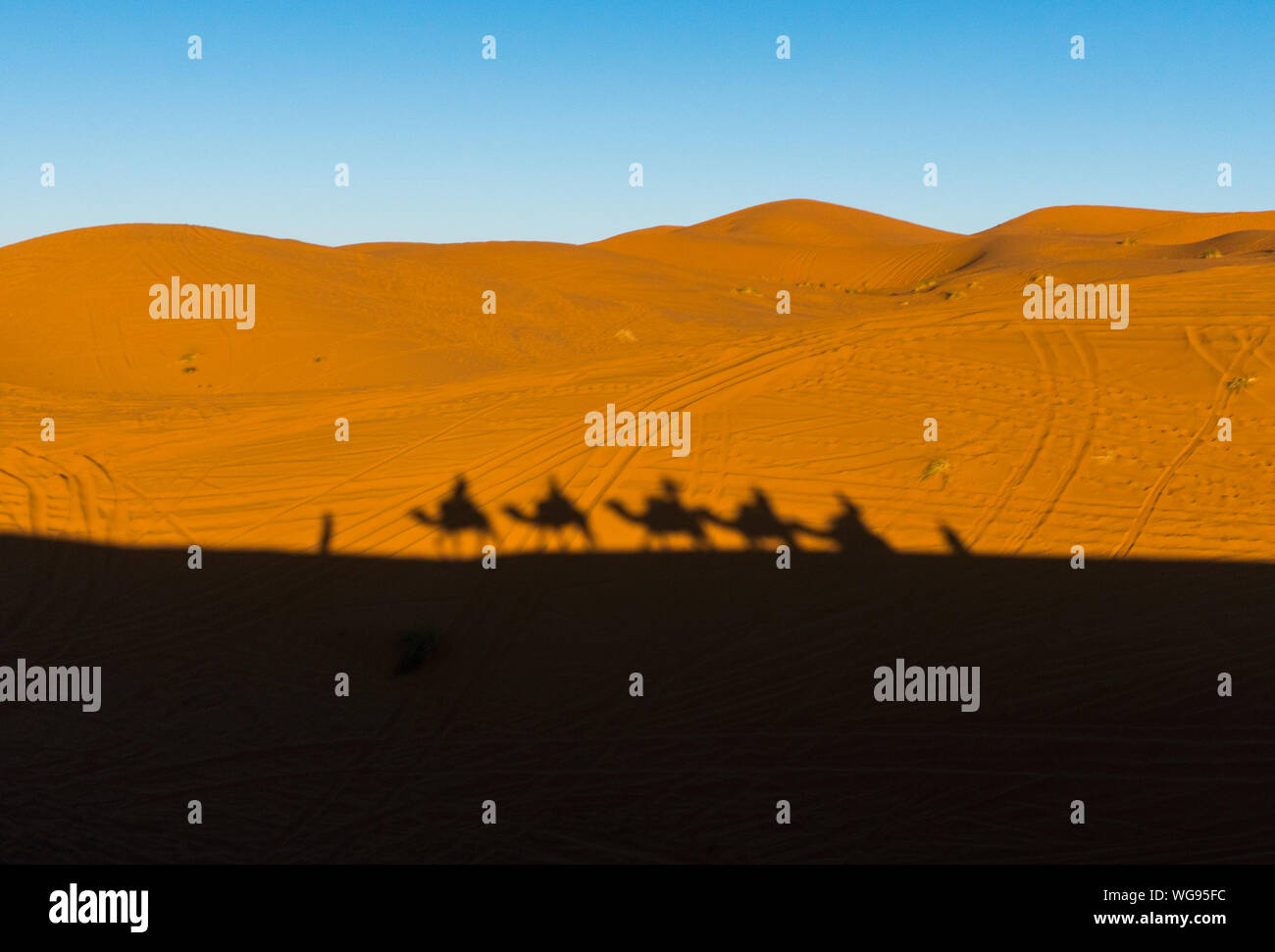 Camels caravan shadows projected over Erg Chebbi desert sand dunes at Morocco Stock Photo