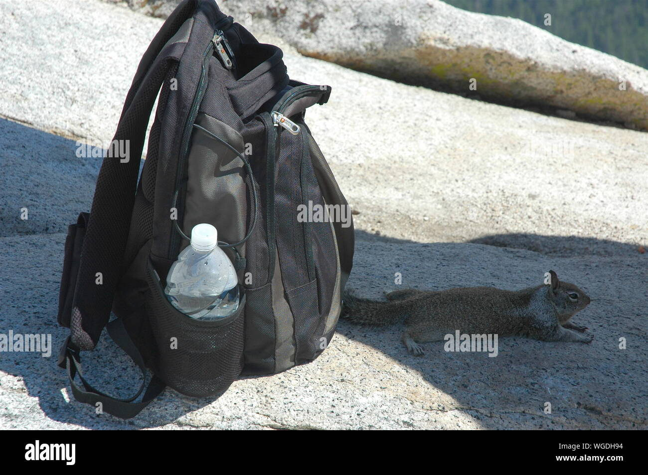 Backpack And Squirrel On Rock Stock Photo
