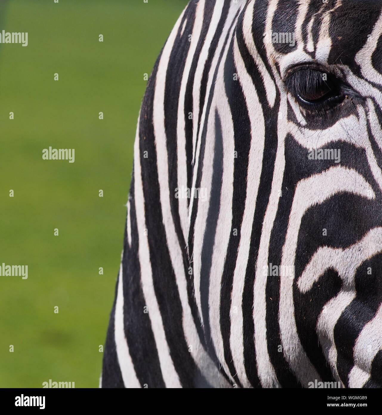 Speed Dating Zebra w Augsburgu Lesbijska aplikacja randkowa Sydney