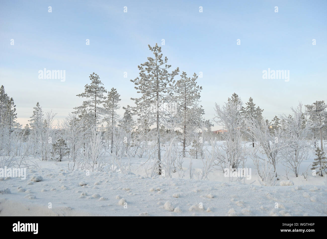 Snow Covered Trees Against Sky Stock Photo