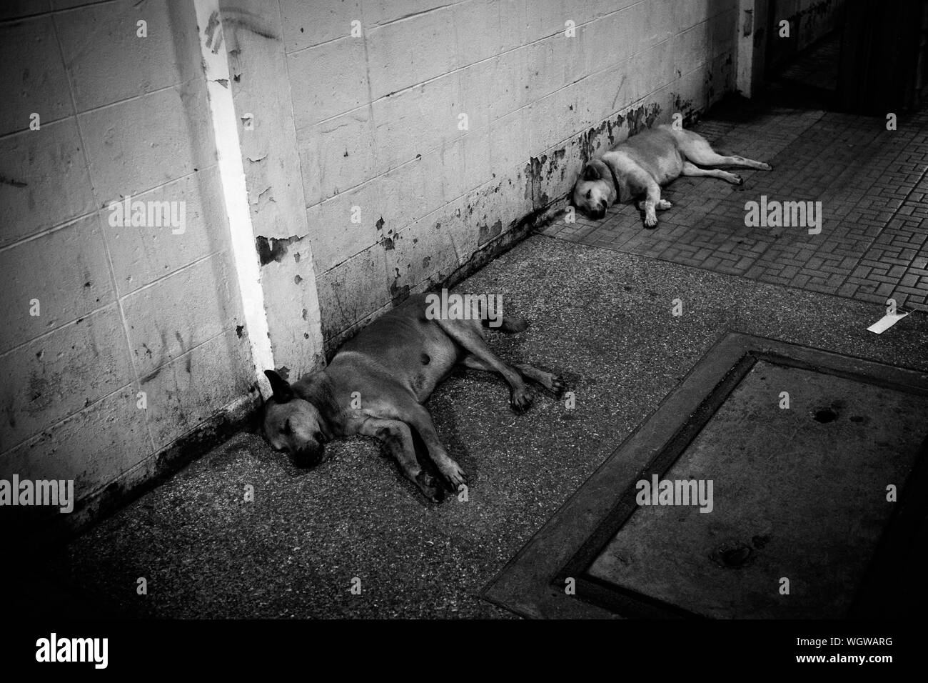 High Angle View Of Dogs Sleeping On Street Stock Photo