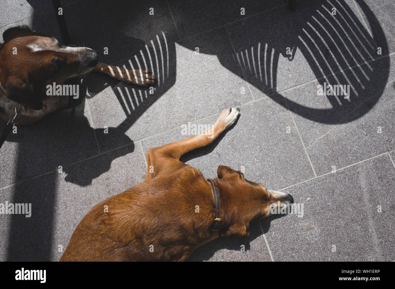 High Angle View Of Dogs Sleeping On Ground Stock Photo