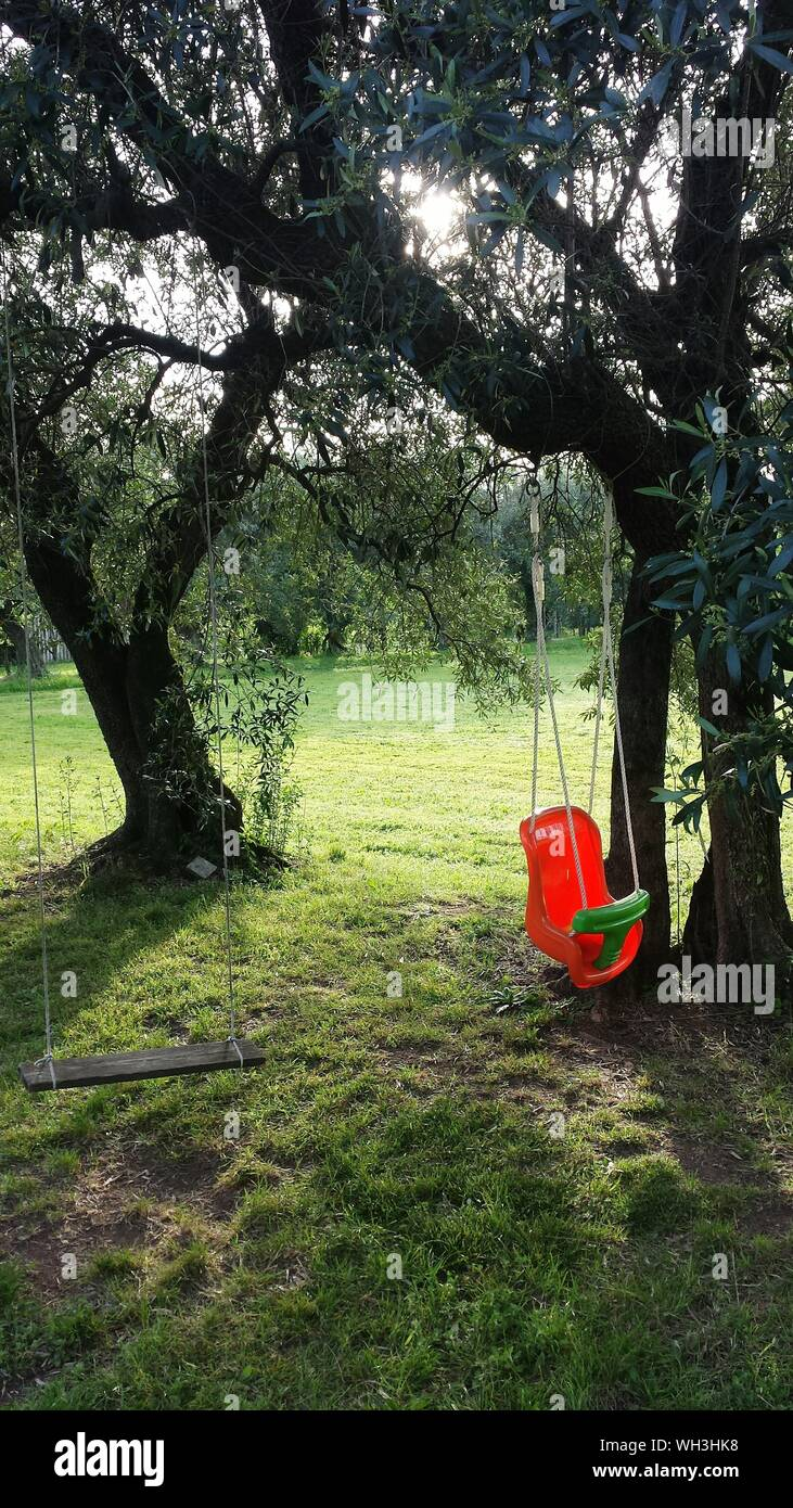 Empty Swings Hanging From Trees In Yard Stock Photo