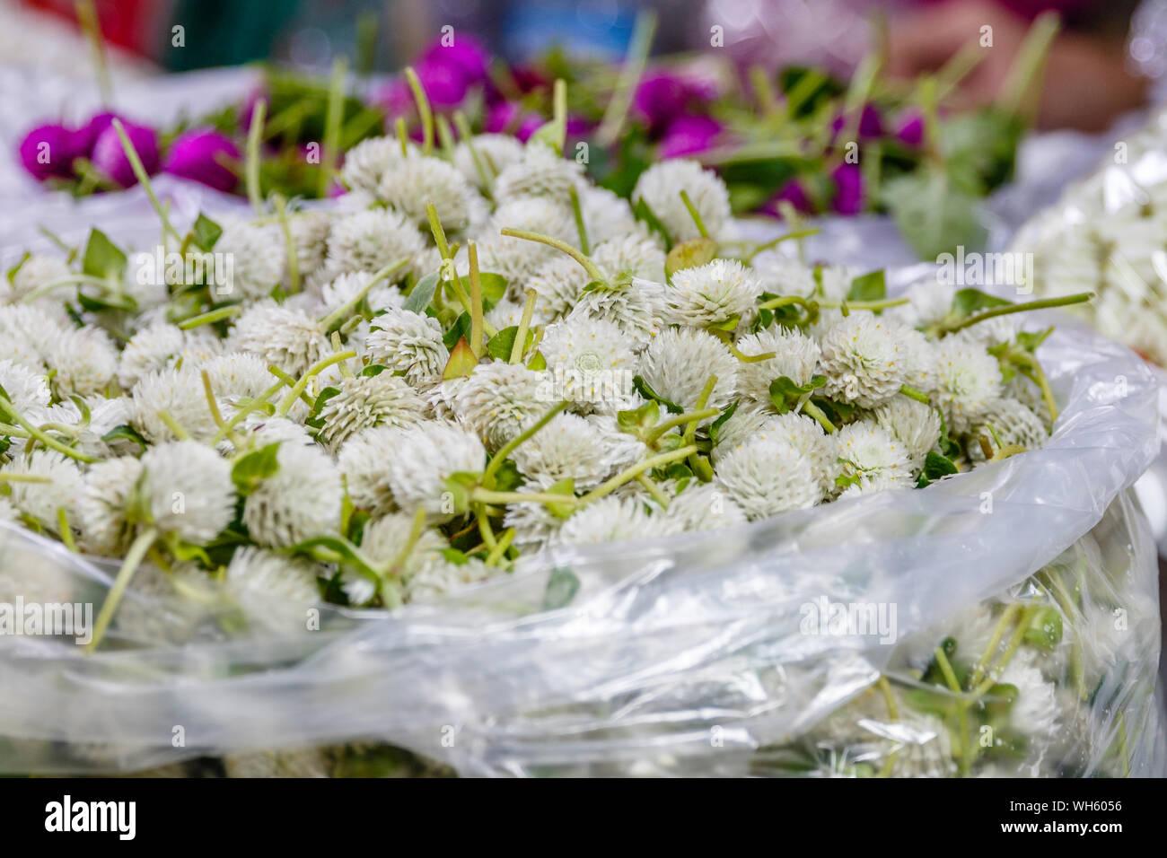 Bags of white сlover or trefoil for making traditional flower garland offerings phuang malai at Pak Khlong Talat, Bangkok flower market. Thailand Stock Photo
