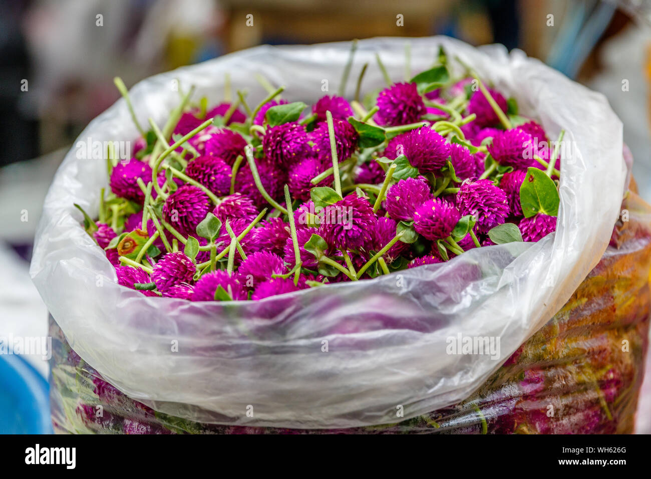 Bags of purple сlover or trefoil for making traditional flower garland offerings phuang malai at Pak Khlong Talat, Bangkok flower market. Thailand Stock Photo