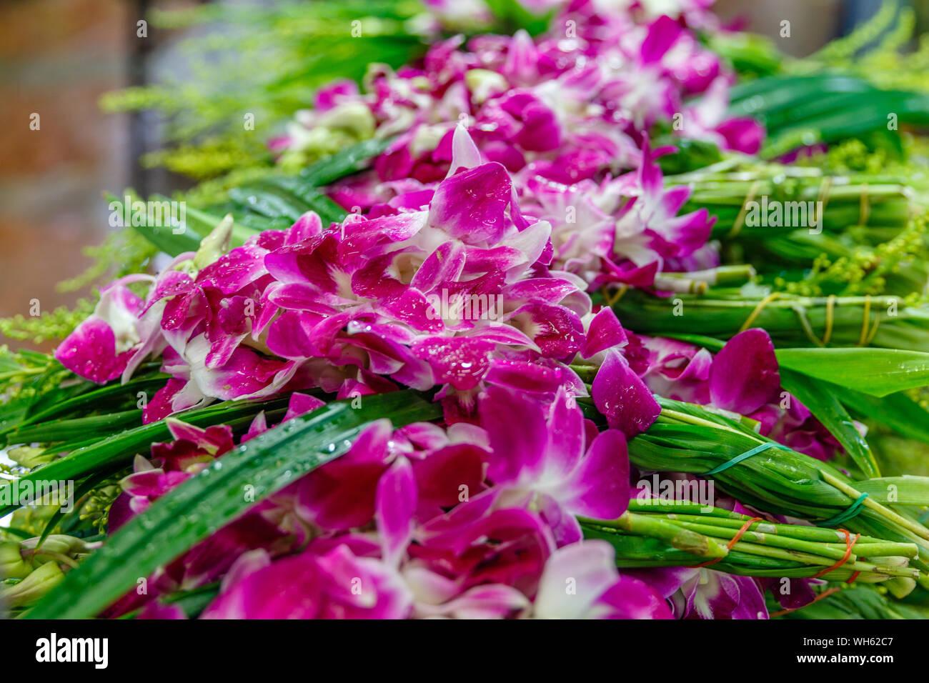 Fresh pink orchids at Pak Khlong Talat, Bangkok flower market. Thailand. Stock Photo