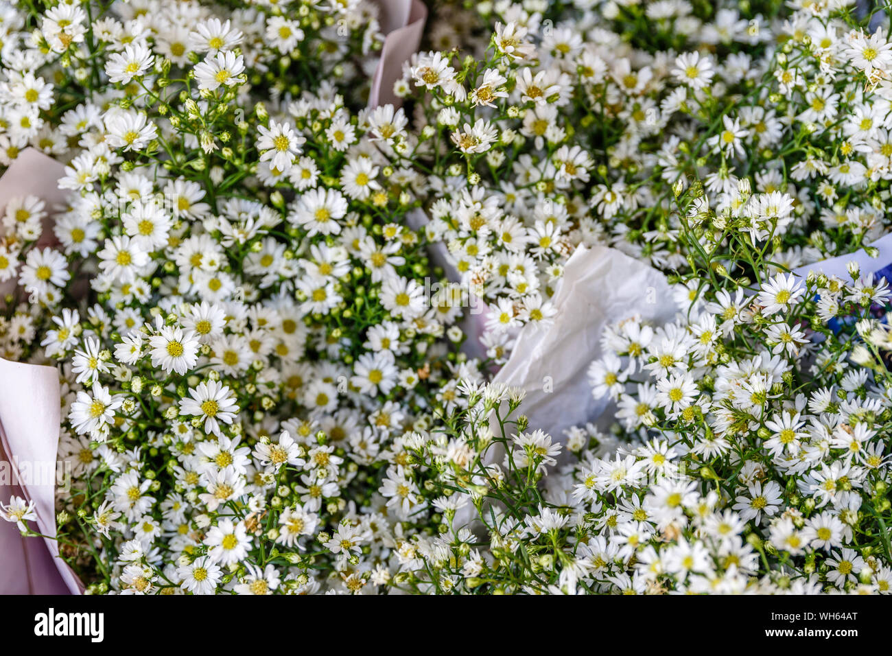Bouquets of white aster flowers at Pak Khlong Talat, famous flower market in Bangkok, Thailand. Stock Photo