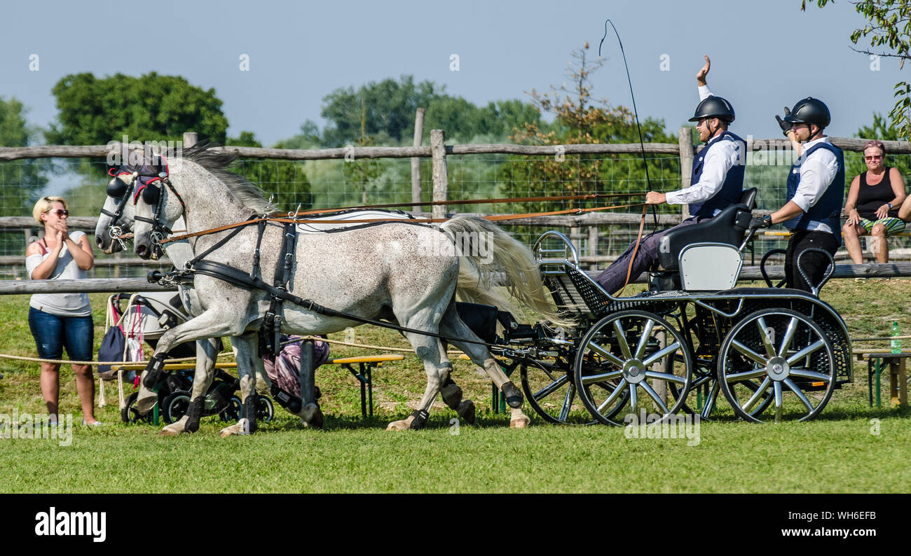 Great Equestrian Show at Schloss Hof. They demonstrate their artistic abilities in impressive show numbers and highly skilled sporting achievements Stock Photo