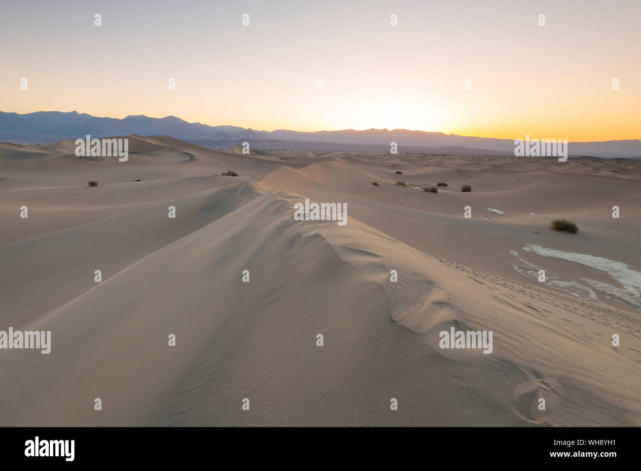 Mesquite flat sand dunes in Death Valley National Park, California, United States of America, North America Stock Photo