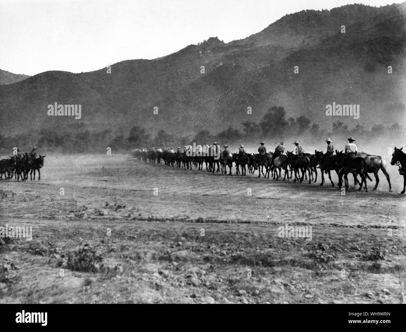 WW1/ The Balkans. Taking mules to water, near Stavros, July 1916. Stock Photo