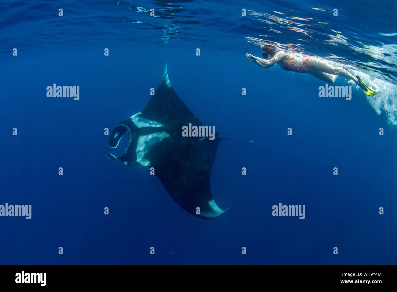 Oceanic manta ray (Manta birostris) feeding near the surface, Honda Bay, Palawan, The Philippines, Southeast Asia, Asia Stock Photo