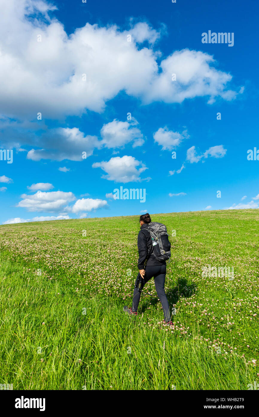 Female hiker on footpath through field of clover near Kildale, North York Moors National Park, North Yorkshire, England. UK. Stock Photo