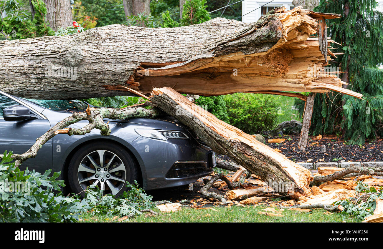 A car crushed with a tree on top of it after the tree split and fell during a wind storm on Long Island New York. Stock Photo