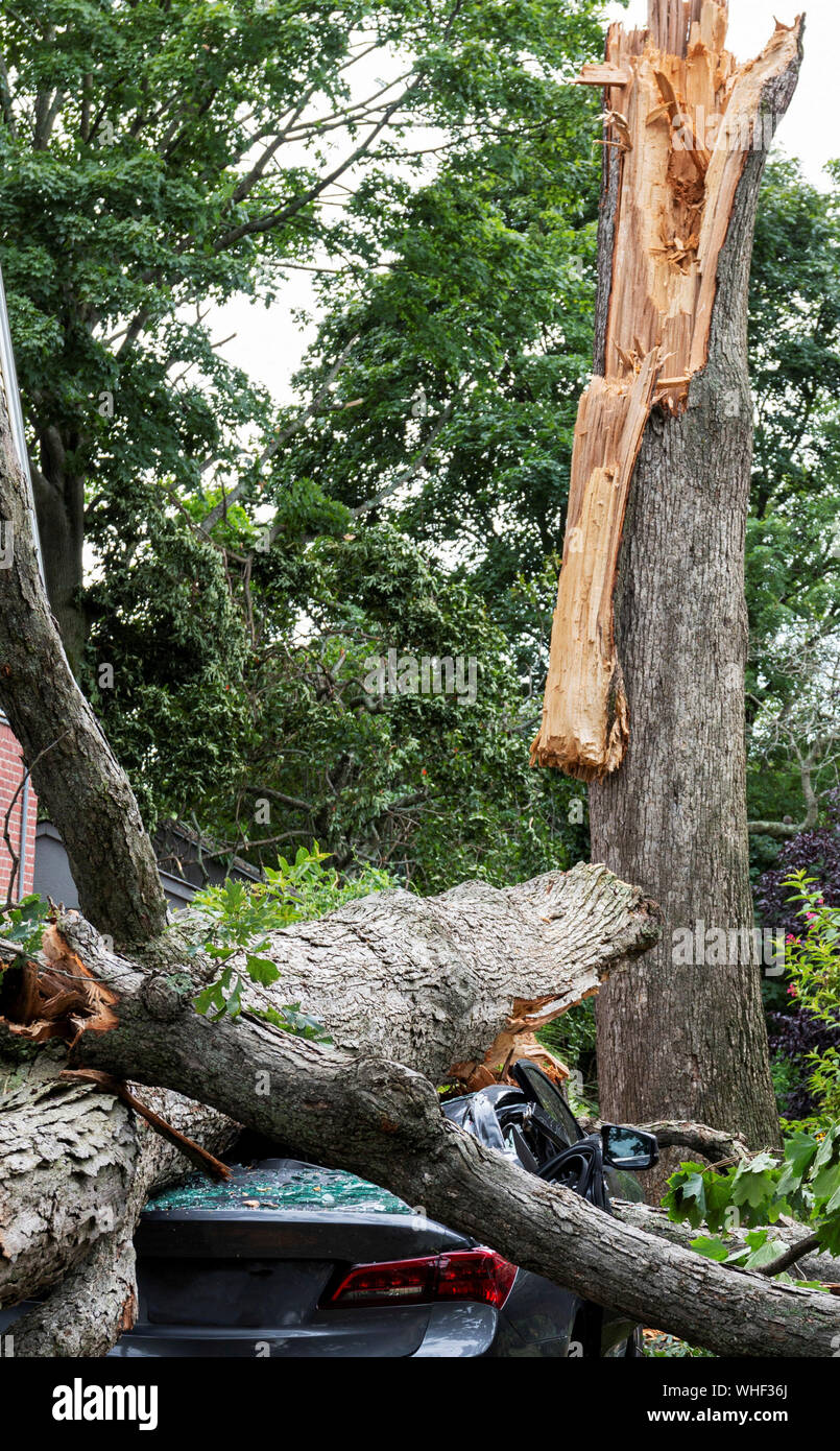 A car is crushed after a tree splits apart during a wind storm in Babylon Long Island New York. Stock Photo
