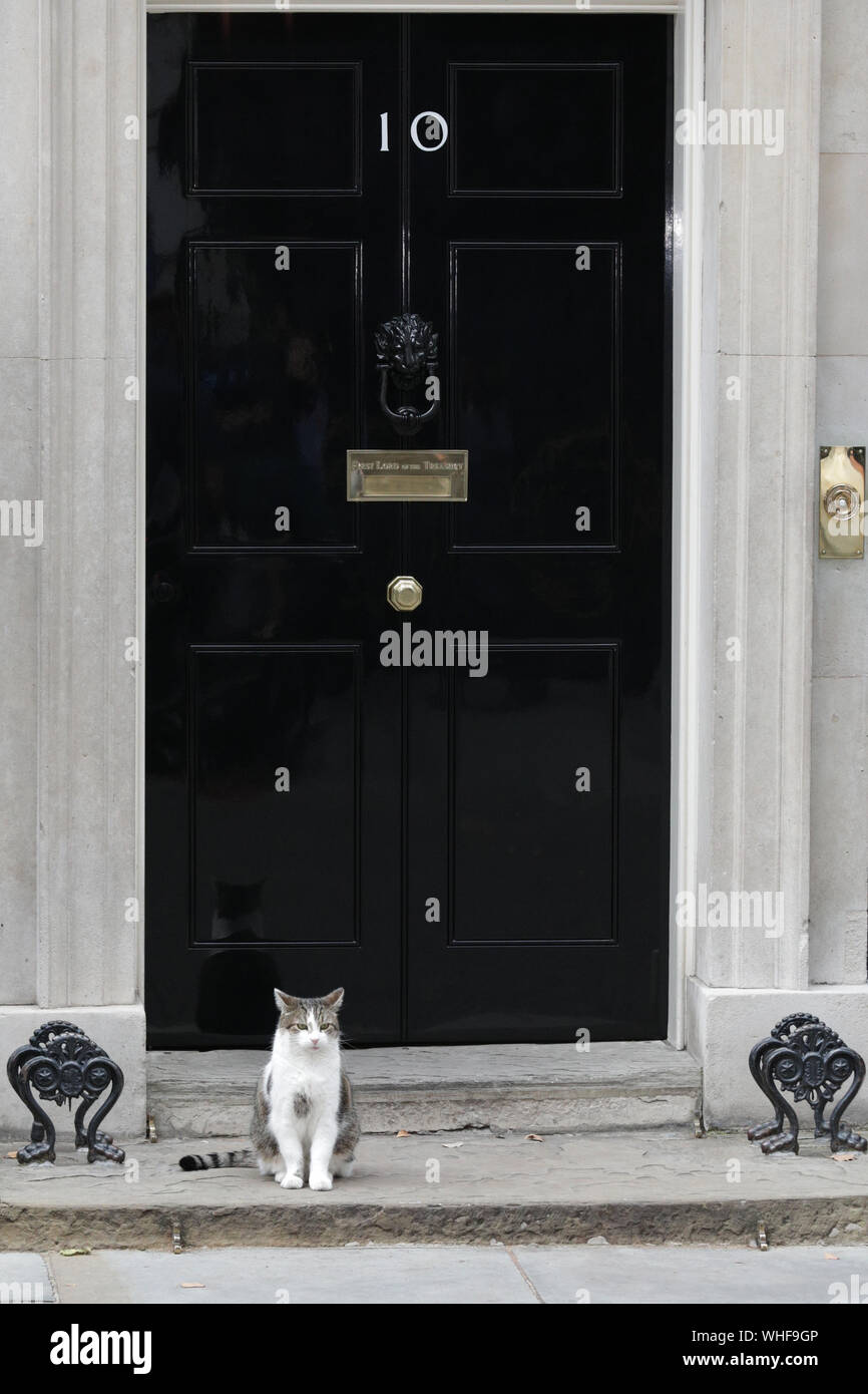 London, UK, 2nd Sep 2019. Larry the Cat awaits visitors to No10 outside the famous black door in Downing Street. Cabinet Ministers, as well as many Conservative Party MPs and former politicians all enter No 10 Downing Street for an Emergency Cabinet Meeting, and later general Conservative Party gathering. Credit: Imageplotter/Alamy Live News Stock Photo