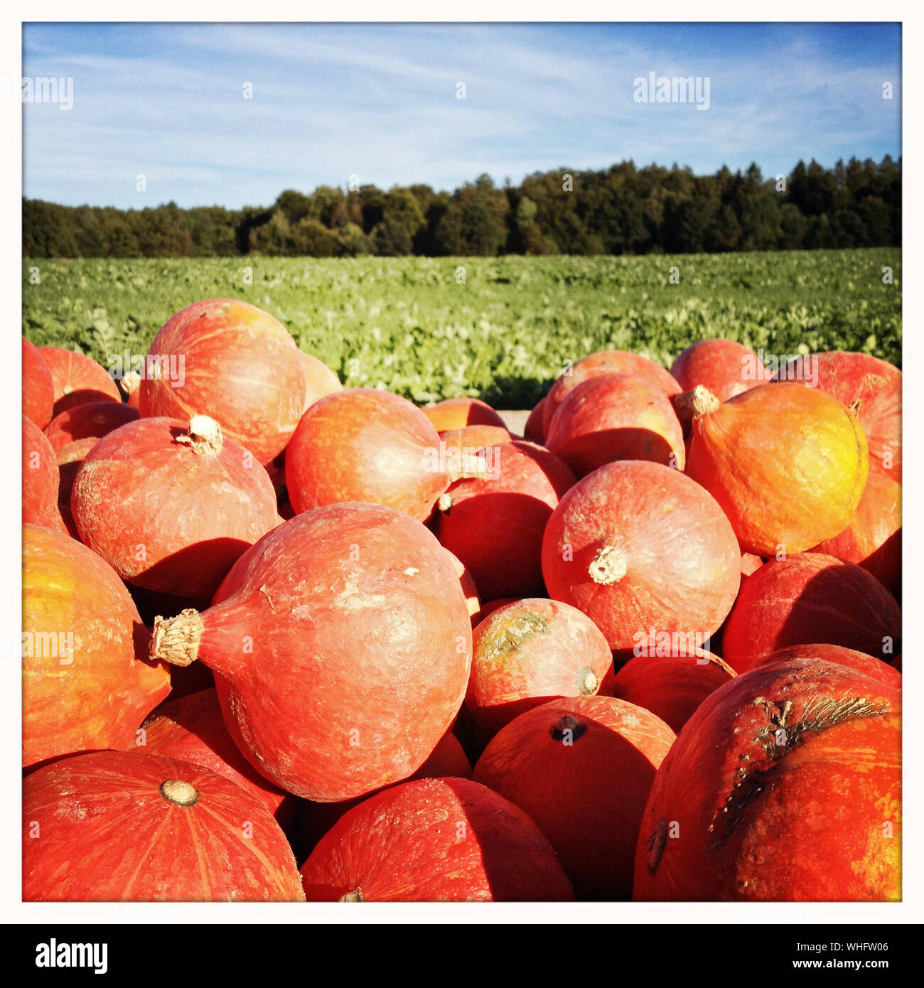 Stack Of Pumpkins On Field Against Sky Stock Photo