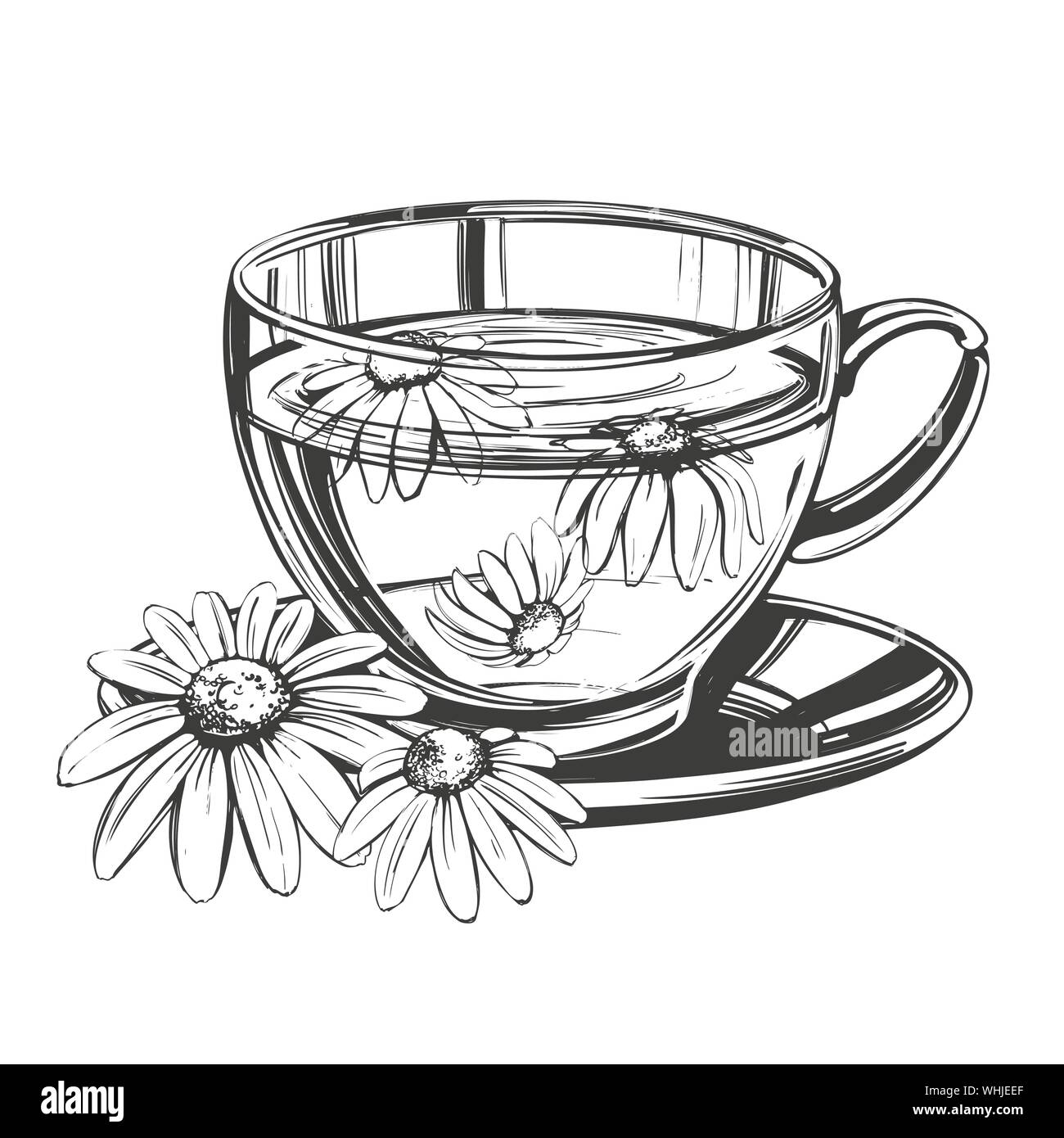 Cup Of Tea With Chamomile Isolated On White Background Hand Drawn Vector Illustration Realistic Sketch Stock Vector Image Art Alamy