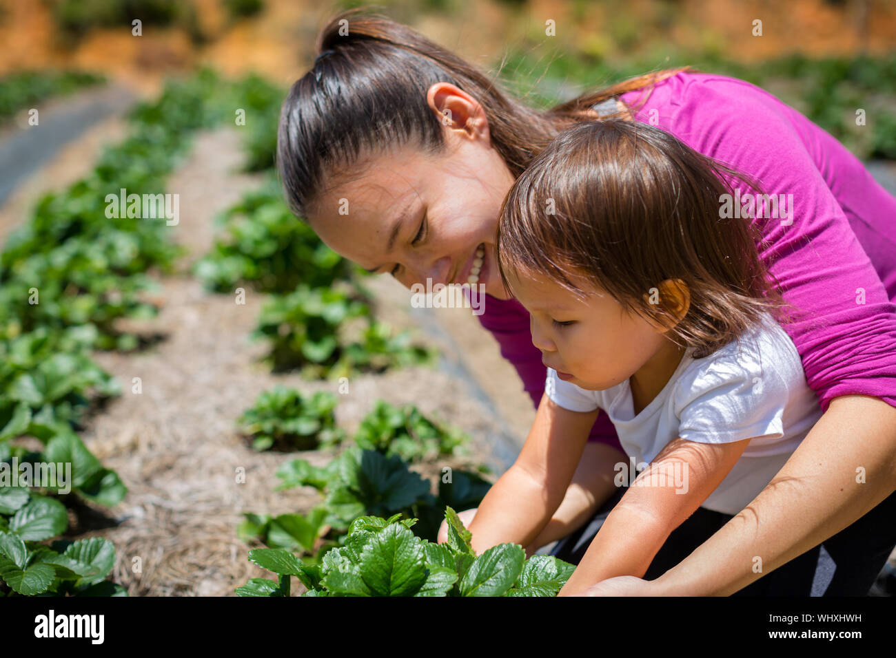 Organic and self sustainability, Planting in a farm Stock Photo