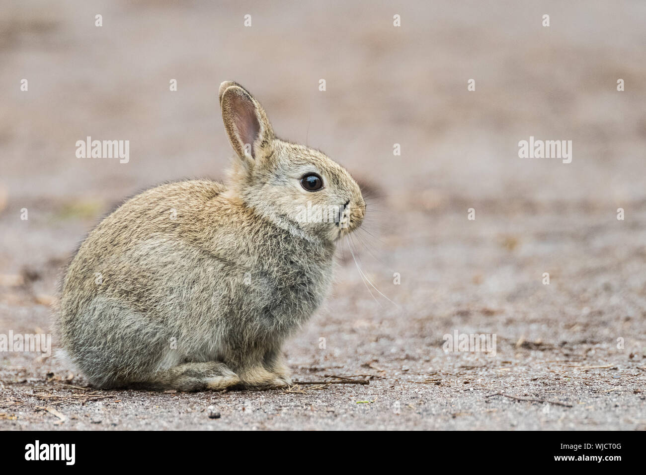 Free Bunny Footprints Cliparts, Download Free Clip Art, Free Clip Art on  Clipart Library