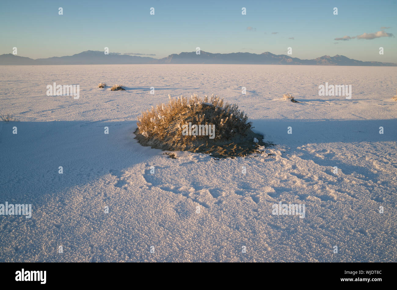 The Bonneville Salt Flats is a densely packed salt pan in Tooele County in northwestern Utah. The area is a remnant of the Pleistocene Lake Bonneville - Stock Photo