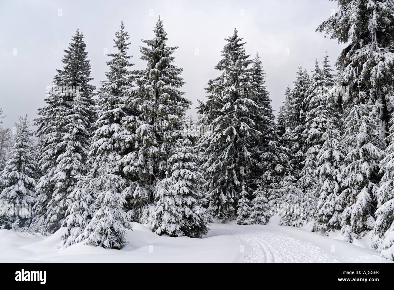 Winter forest in Harz mountains national park, Germany Stock Photo