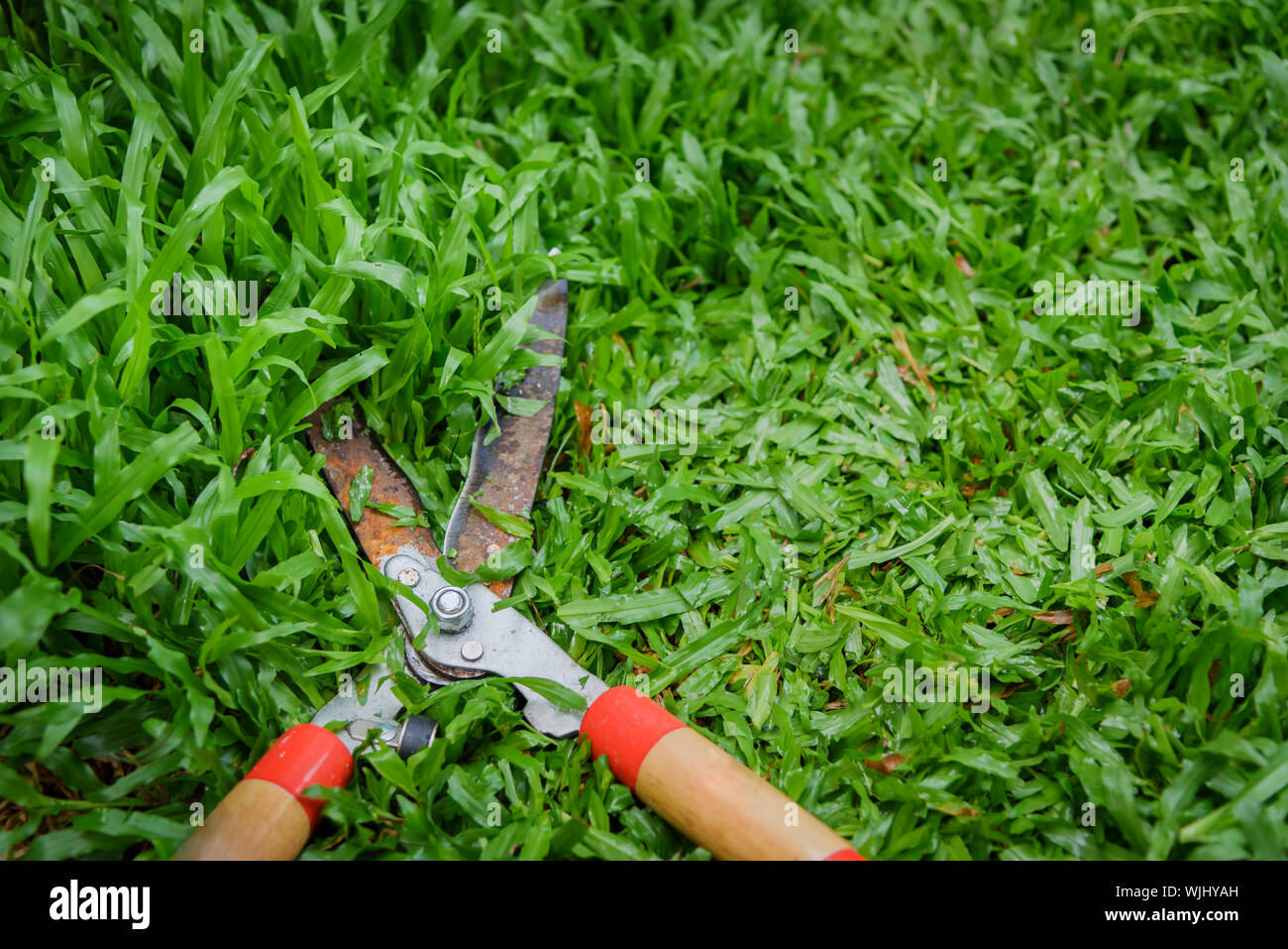 hands hold the gardening scissors on green,cutting the grass by gardener. Stock Photo
