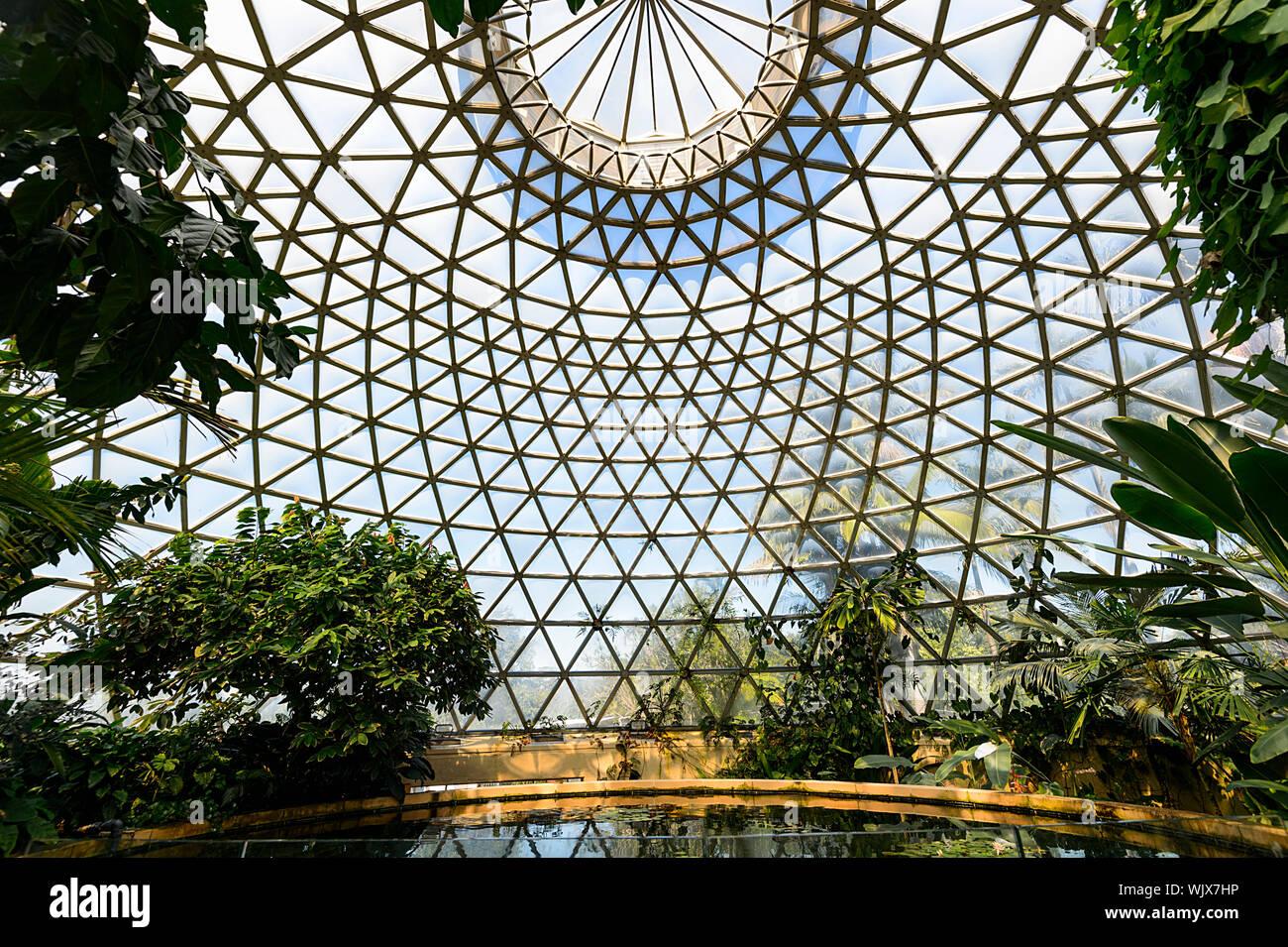 Inside the Tropical Display Dome at Mt Coot-tha Botanic Gardens, Brisbane, Queensland, QLD, Australia Stock Photo