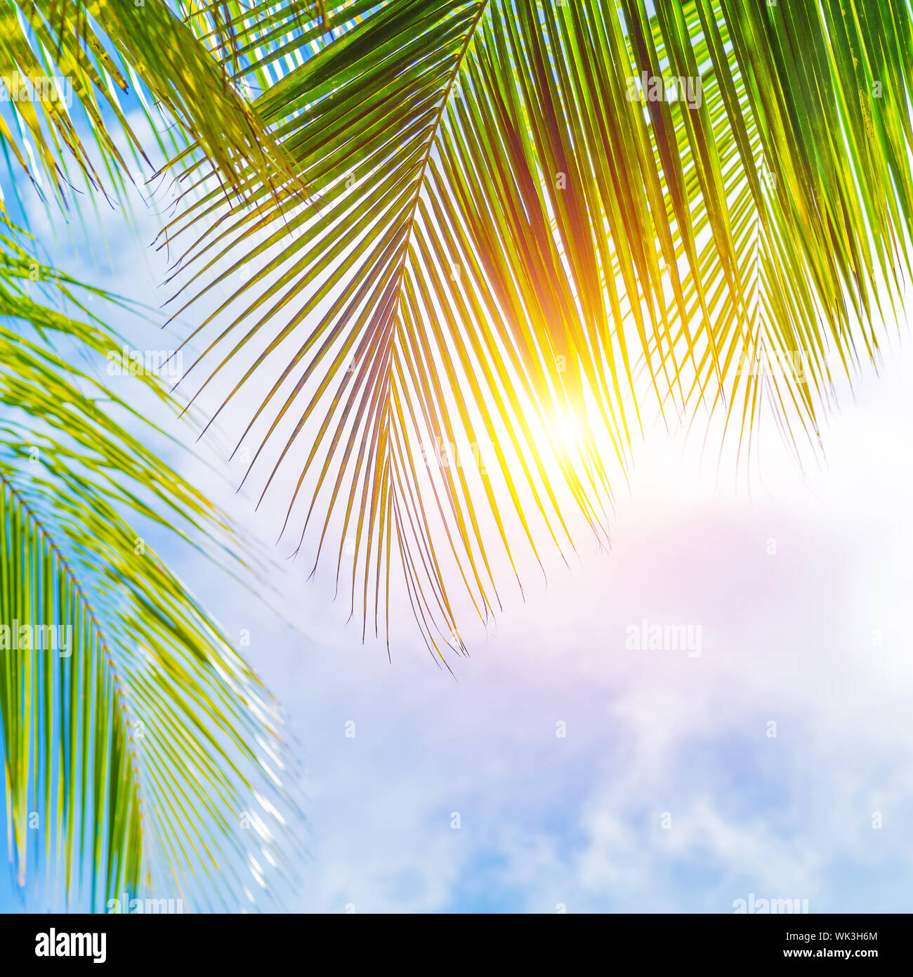 Fresh Green Palm Tree Leaves Border On Blue Cloudy Sky Background Sunny Day Beautiful Natural Wallpaper Summer Holidays Concept Stock Photo Alamy
