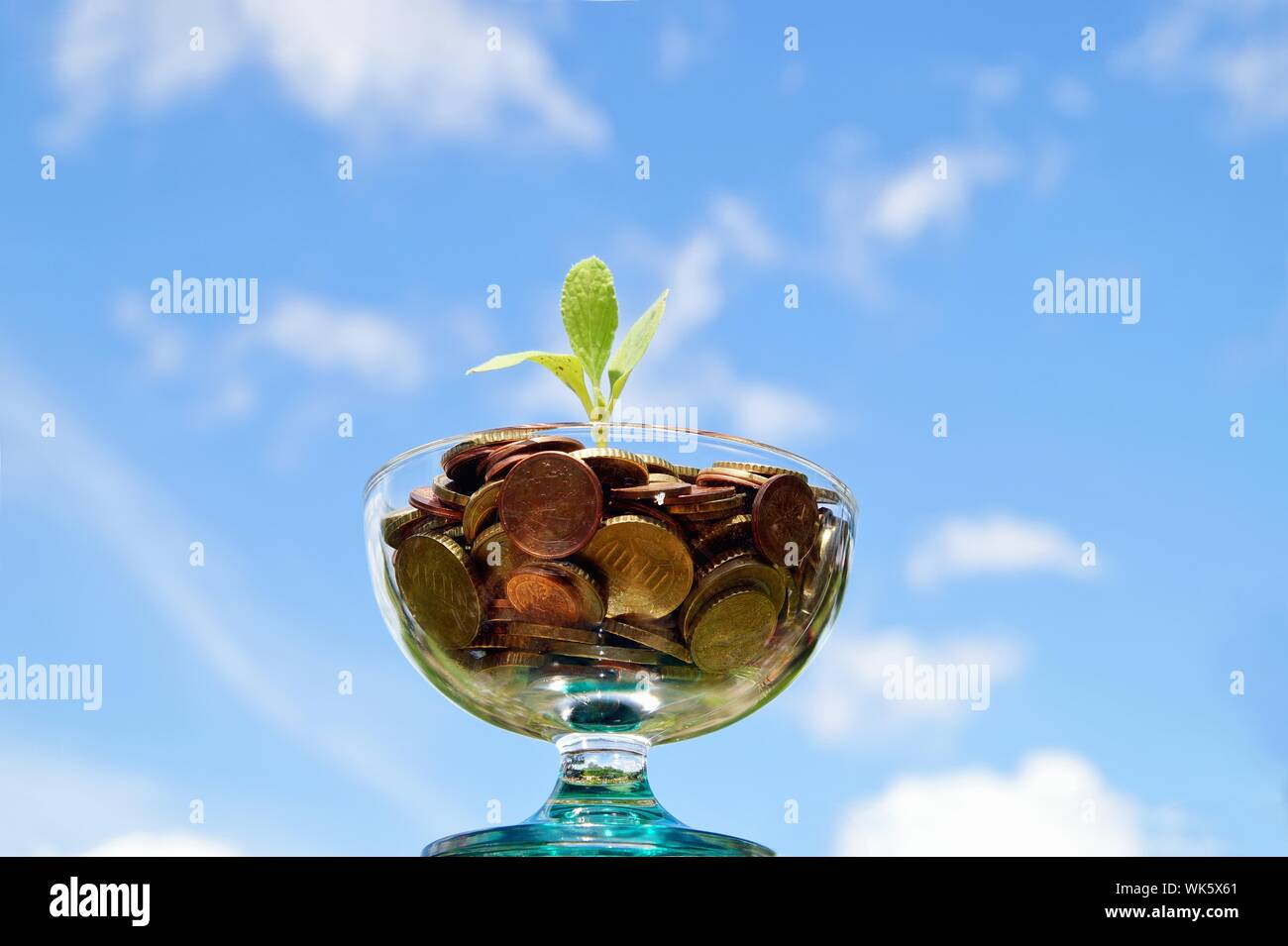 plant growing out of pile of euro coins on the sky background. plant growing from coin jar. Investing to green business. Investment and saving concept Stock Photo