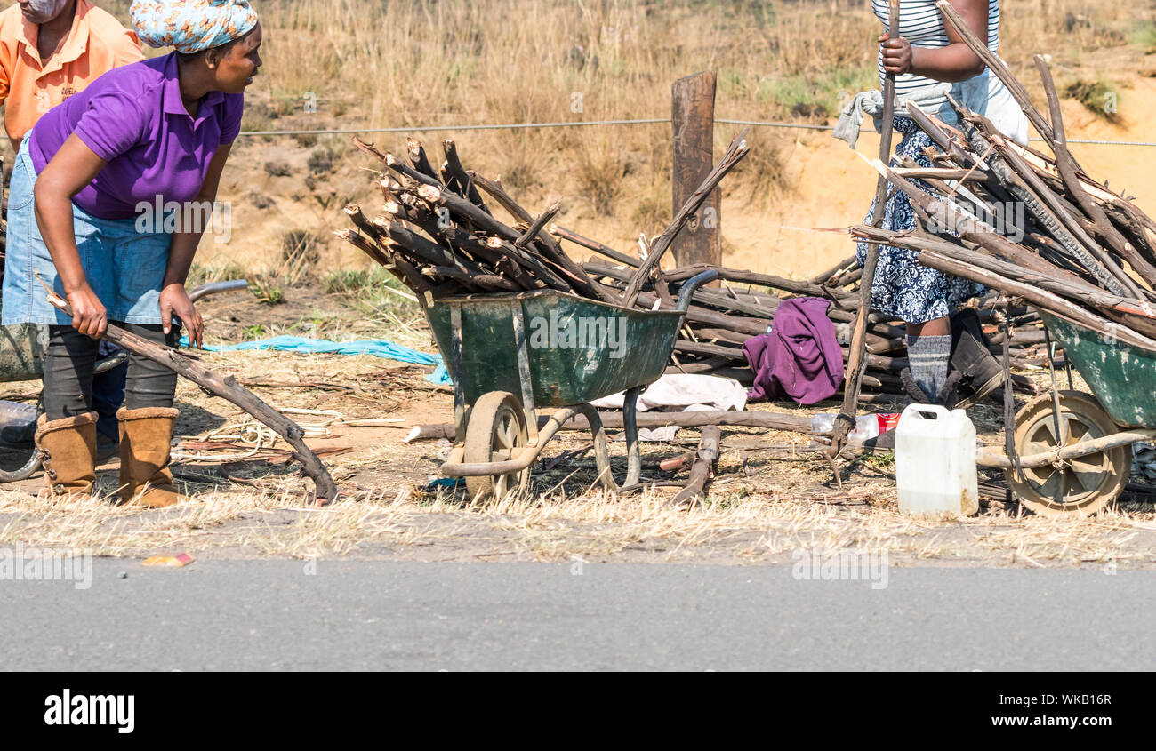 African women or people collecting fire wood on the side of the road for use in daily life in Gauteng, South Africa Stock Photo