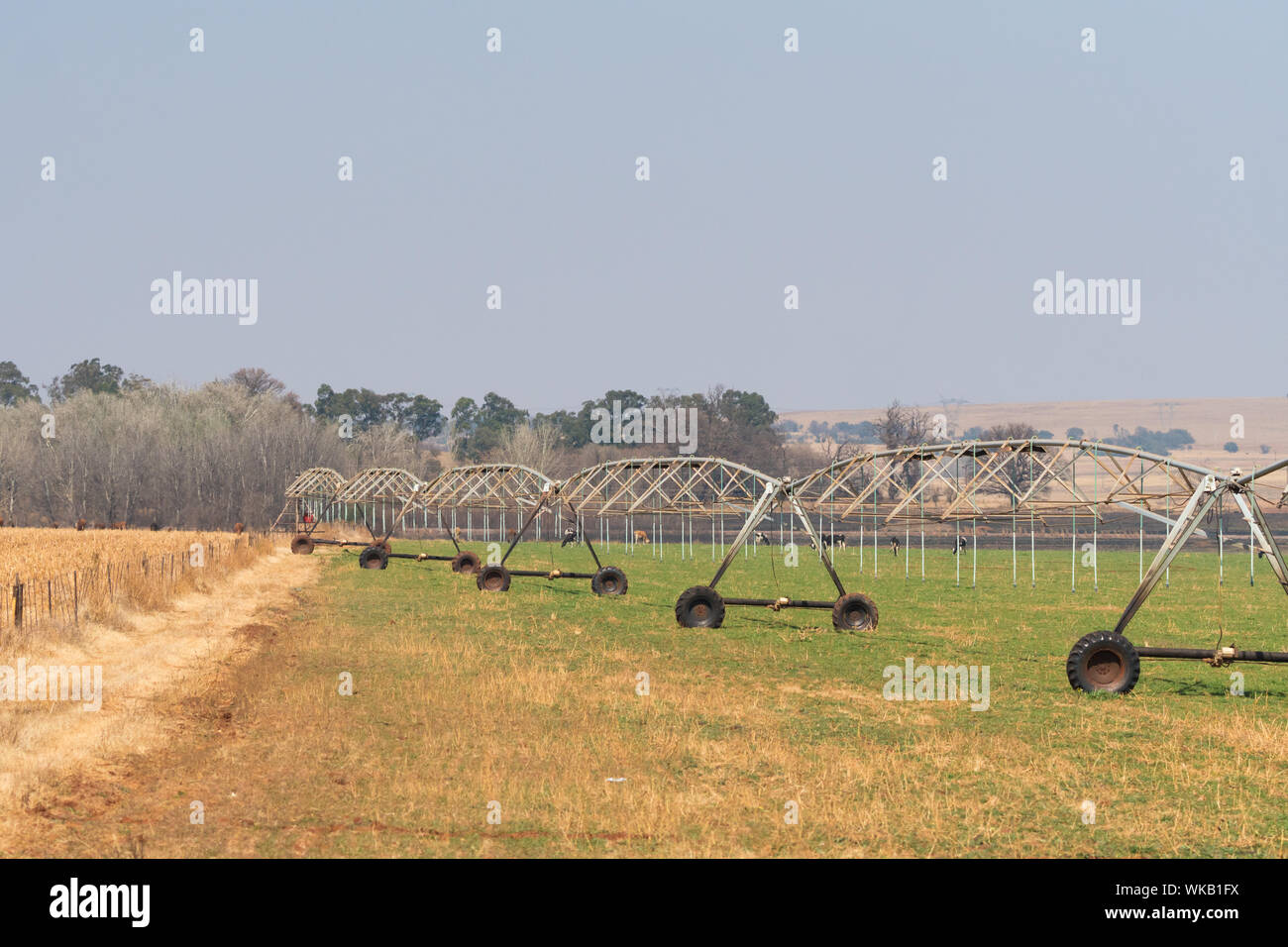 agricultural centre pivot irrigation system in a farm field not being used or not functioning in Gauteng, South Africa Stock Photo