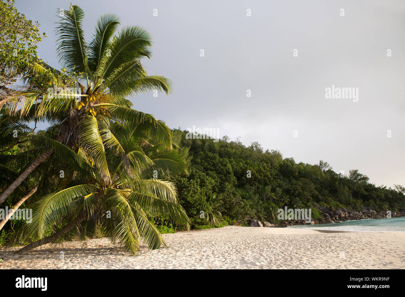 Beach panorama with palm trees, Praslin island, Seychelles Stock Photo