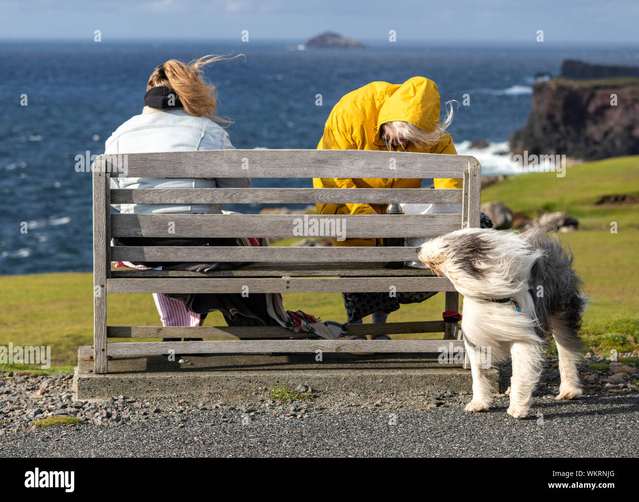 Women blowing her hair and Old English Sheepdog with his hear blowing due  to strong wind, Northmavine peninsula, Mainland, Shetland, Scotland, UK  Stock Photo - Alamy