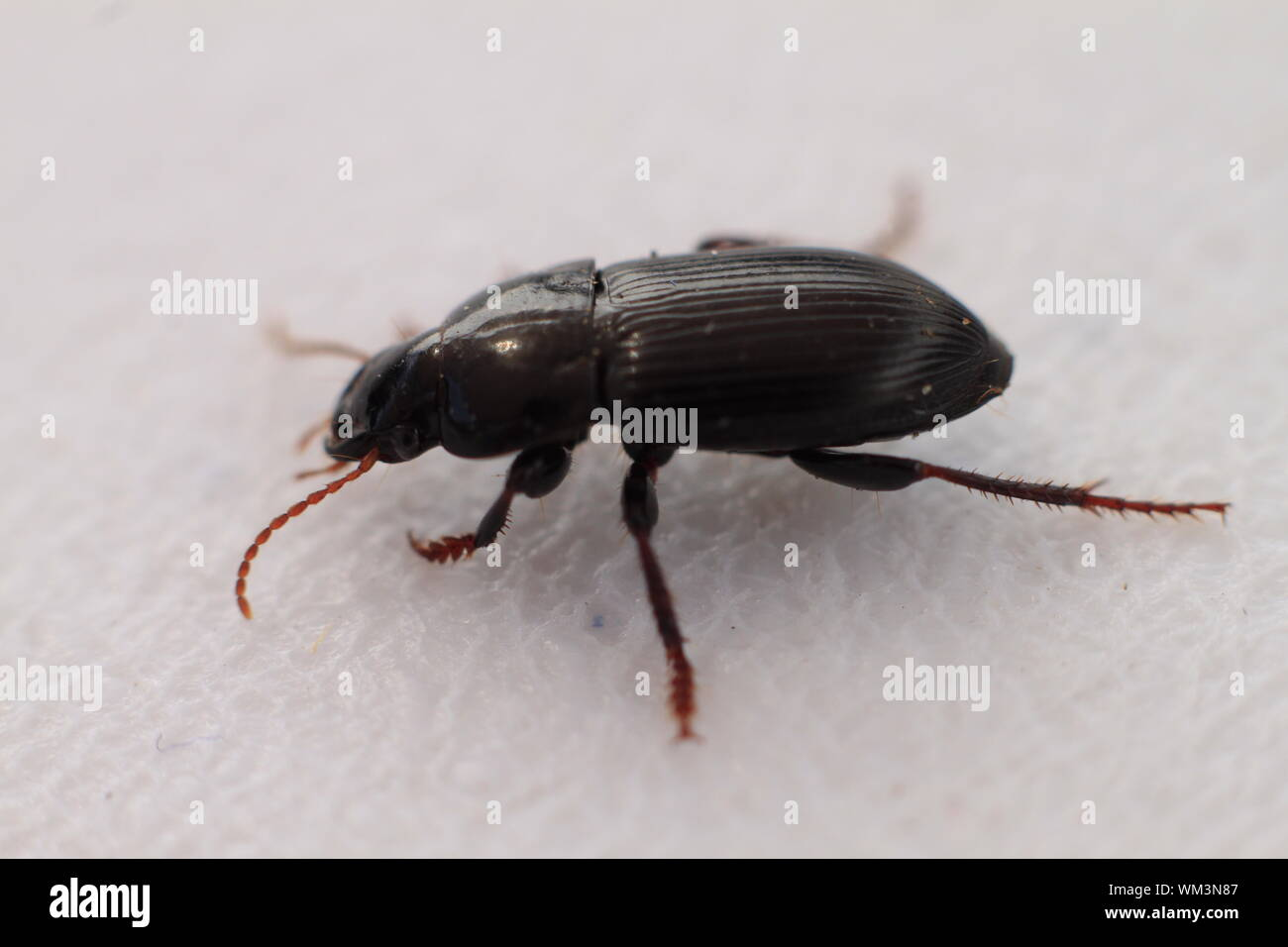 Macro Shot Of Beetle On White Background Stock Photo