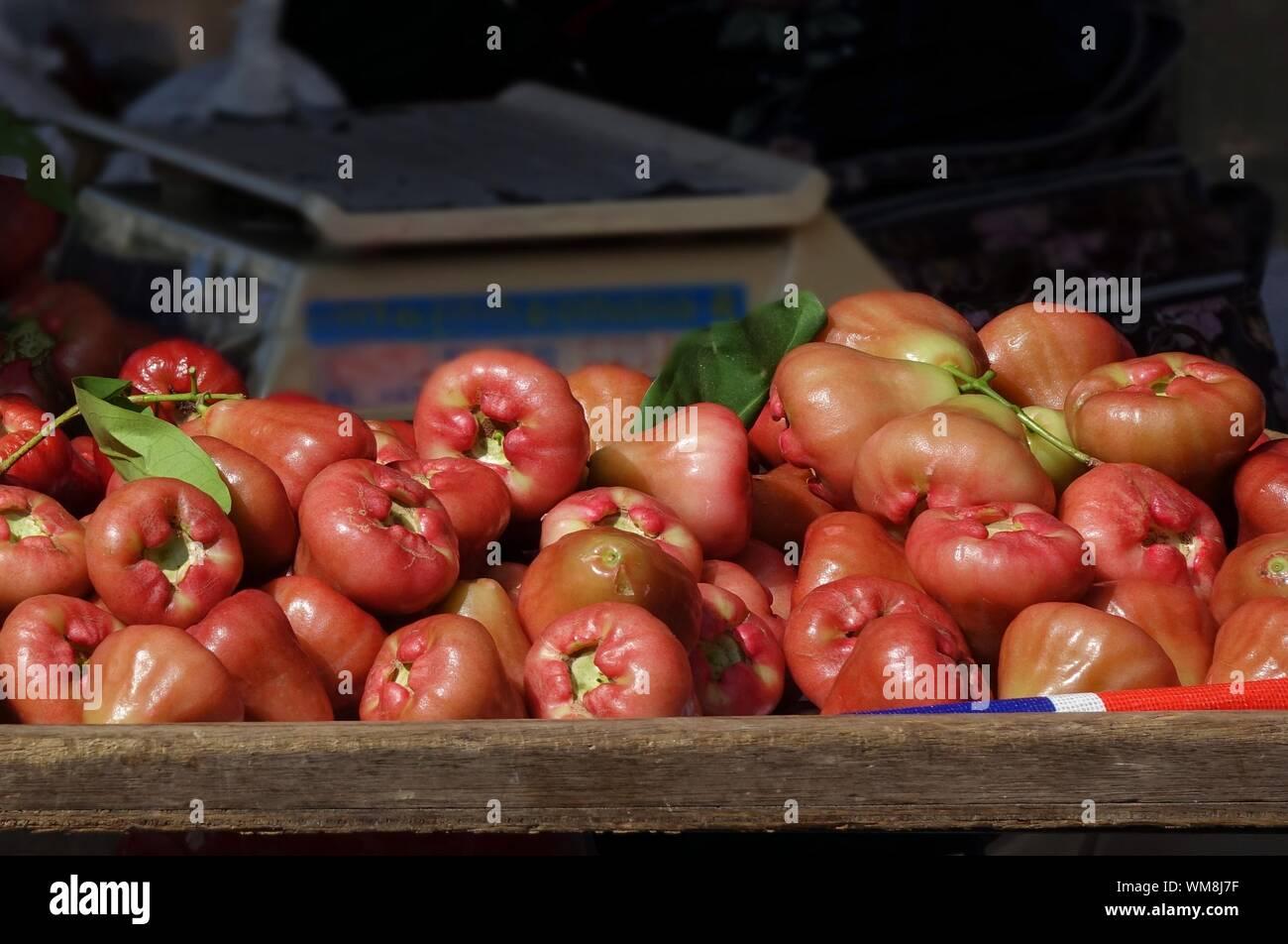 Wax apples or bell fruits (Syzygium samarangense) are a