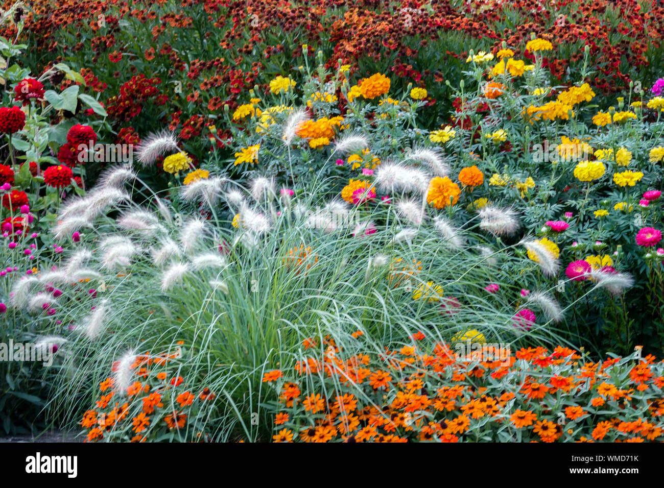 Beautiful Garden Border Colorful Flowers Mixed Annual And