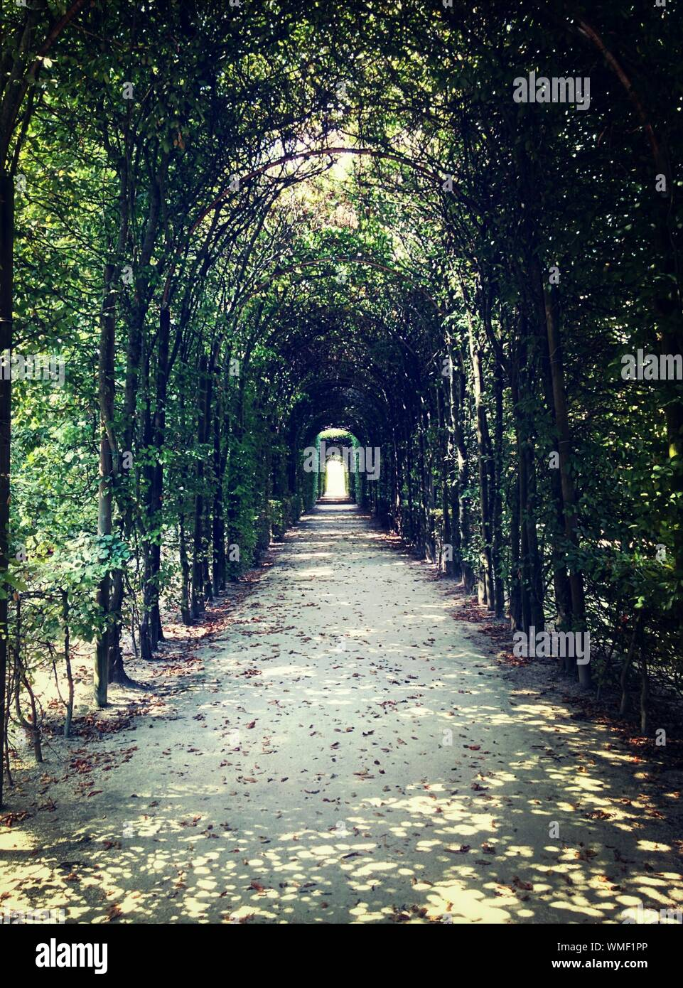 Footpath Through Pergola Covered In Ivy Stock Photo   Alamy