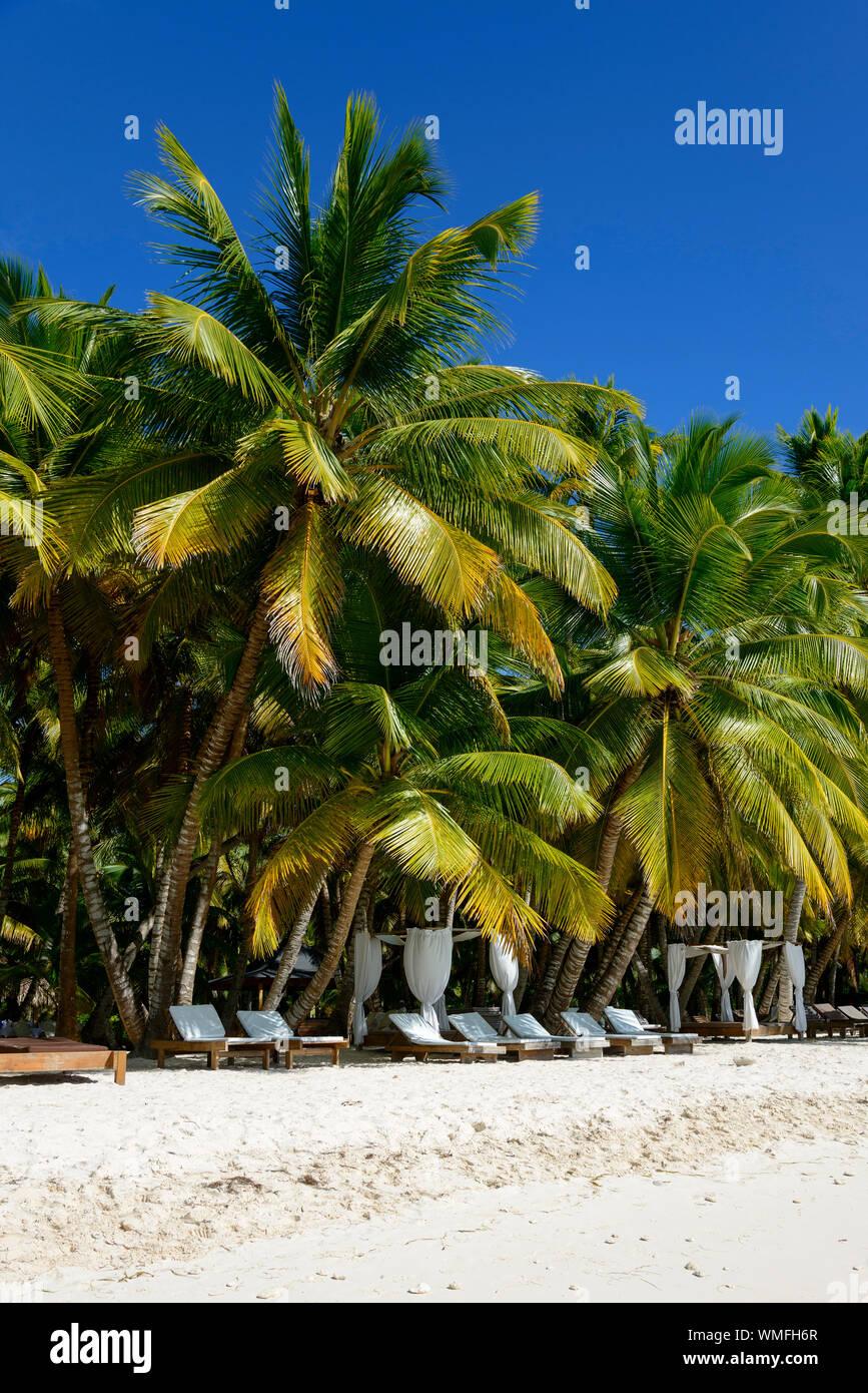 Palm beach, Island Isla Saona, Parque Nacional del Este, Dominican Republic, Carribean, America Stock Photo
