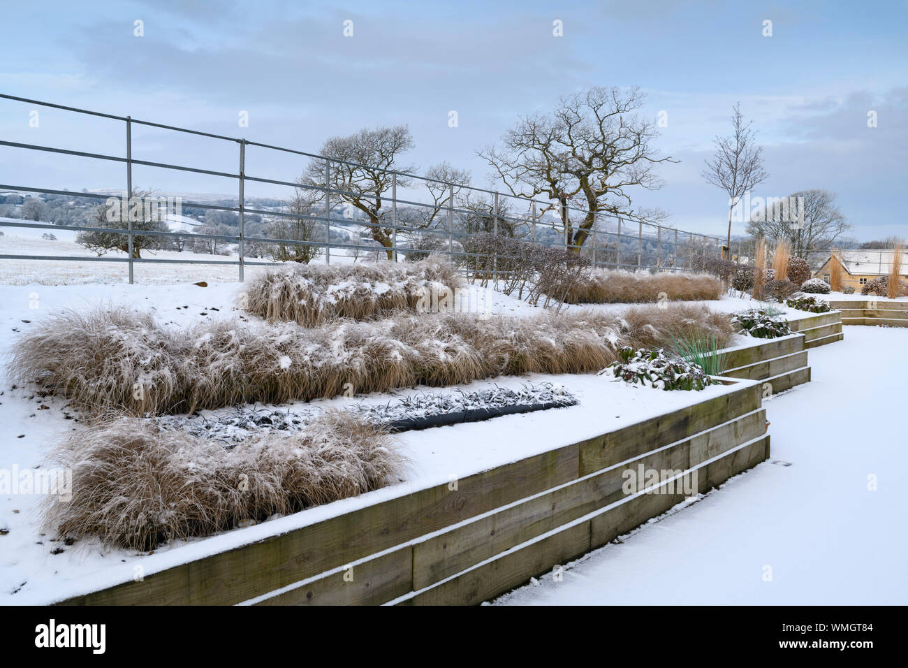 Stylish, contemporary design, landscaping & planting on wooden raised beds (grasses in lines) - snow covered winter garden, Yorkshire, England, UK. Stock Photo