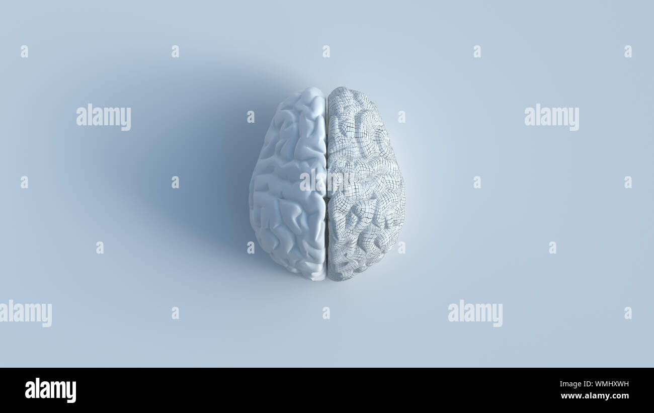 3d render of white human brain with 2 sides include 1 shattered side, top view minimalist concept on white background. Stock Photo