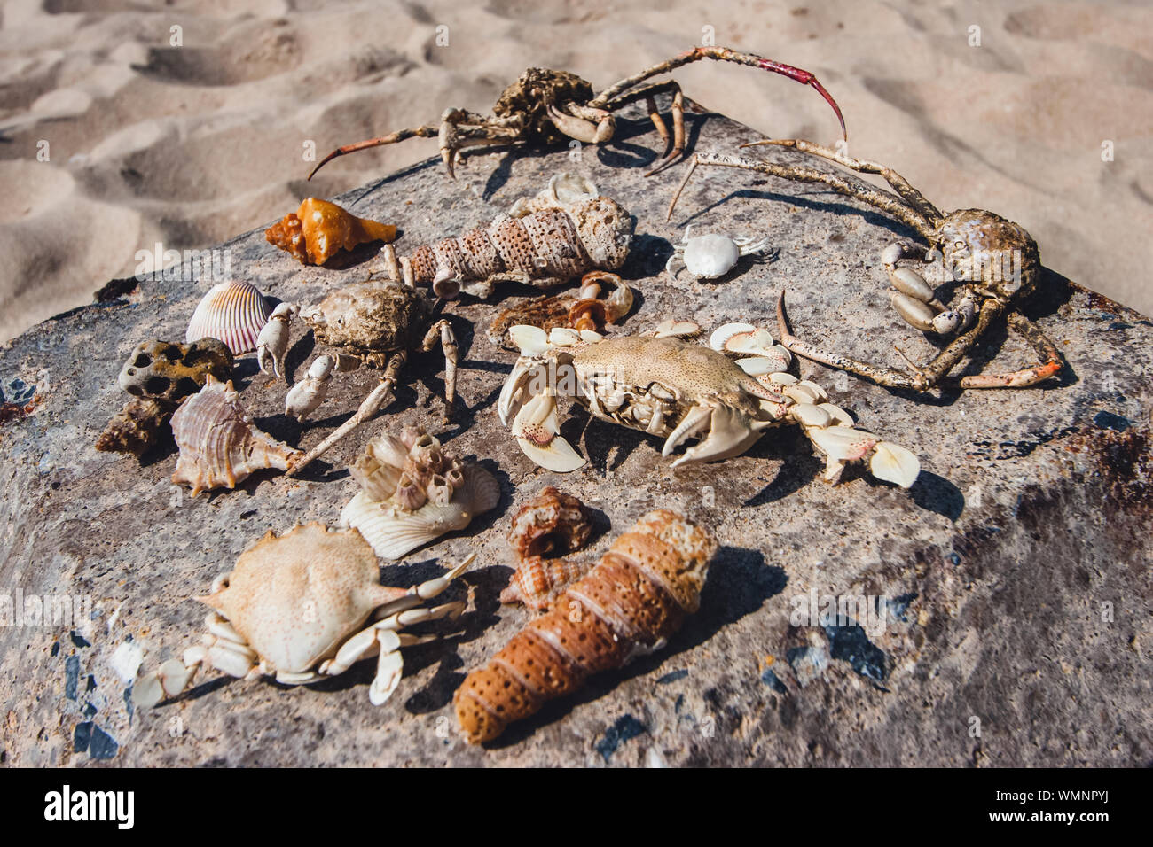 Beach finds. Dry crabs, shells, sea creatures, seafood collected on the beach, seafood lie on a stone on the sand. Claws, paws, dried skin. Stock Photo