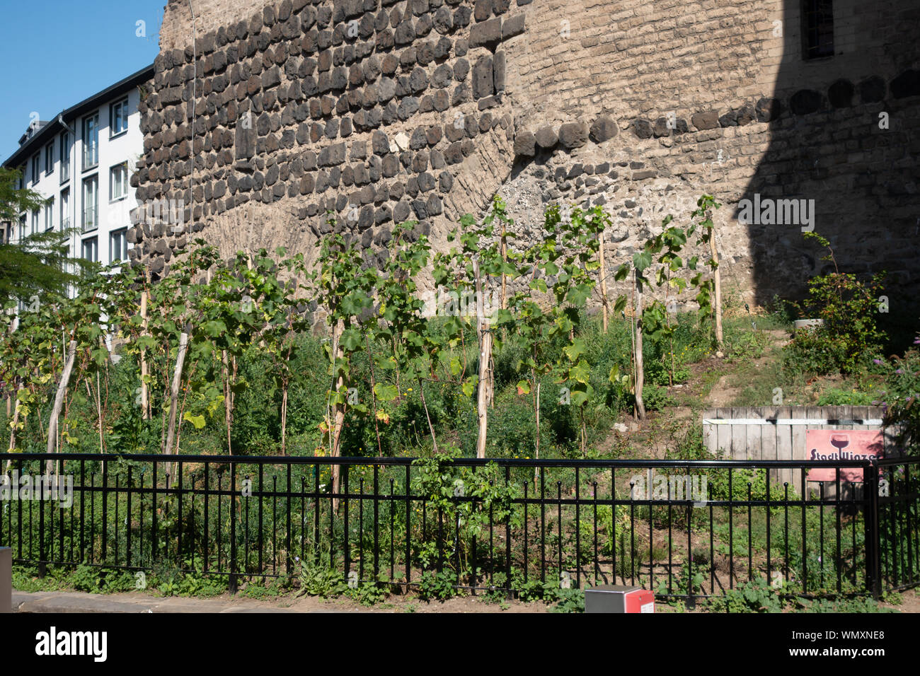 Inner city vineyard at the Severinstor in Cologne, Germany. Stock Photo