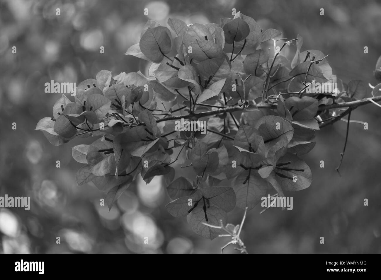 Blurred Flowers In Foreground Black And White Stock Photos Images Alamy