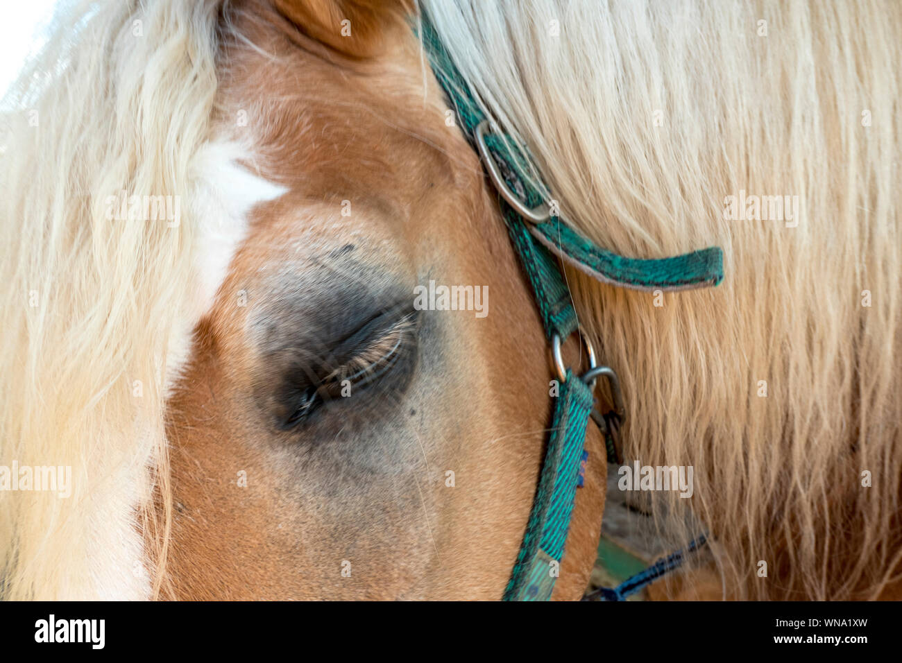 Eye of a horse in close-up view Stock Photo
