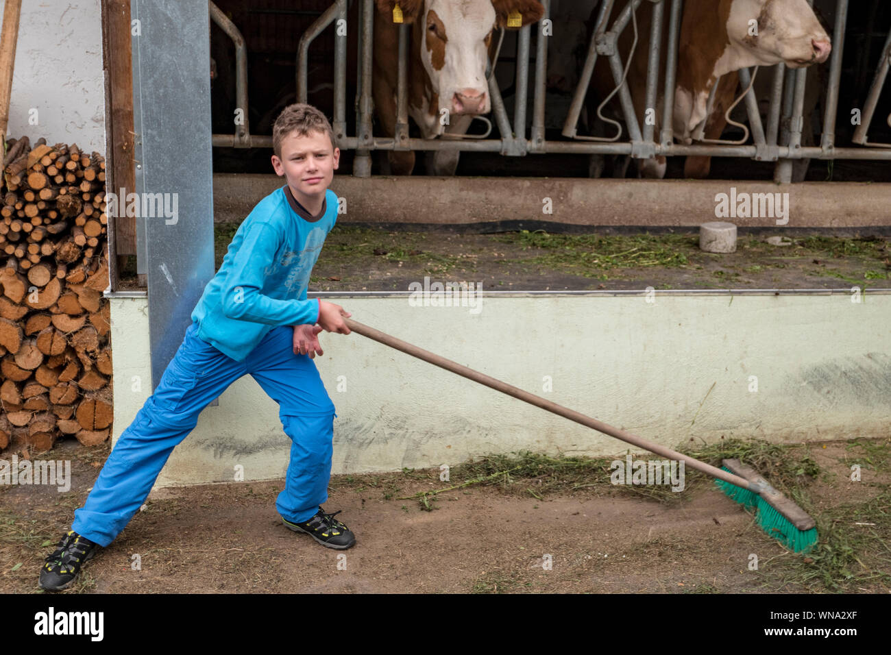 Boy dressed in blue sweeping the floor in front of a cowshed Stock Photo